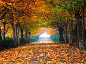 秋水如诗,秋色如画!六合的秋,原来这么美!