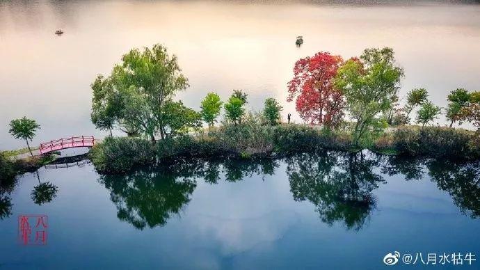 现在就来!秋末的南京,美成了油画!